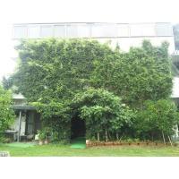 事務所建物を覆う「つる植物」