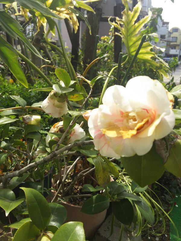 京都市内の朝の花