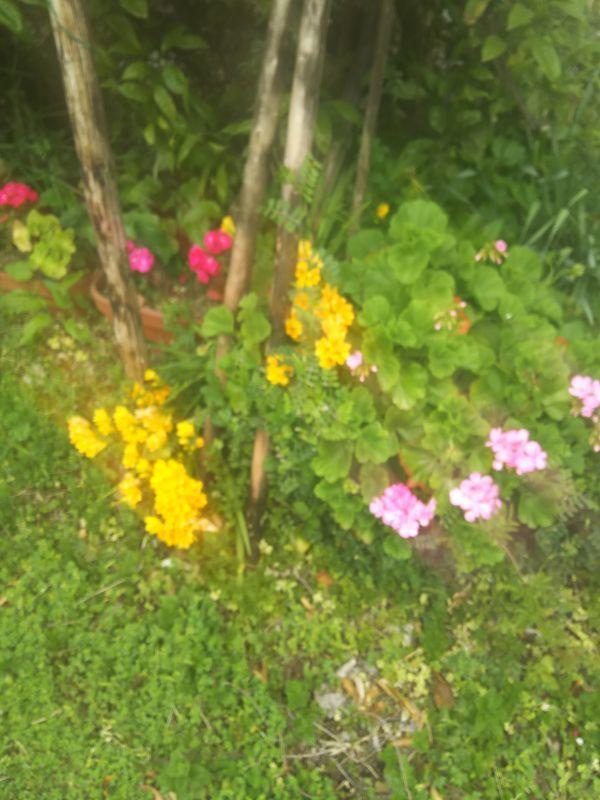 京都の吉本事務所に咲く花