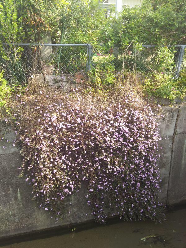 京都の相続税相談室の花