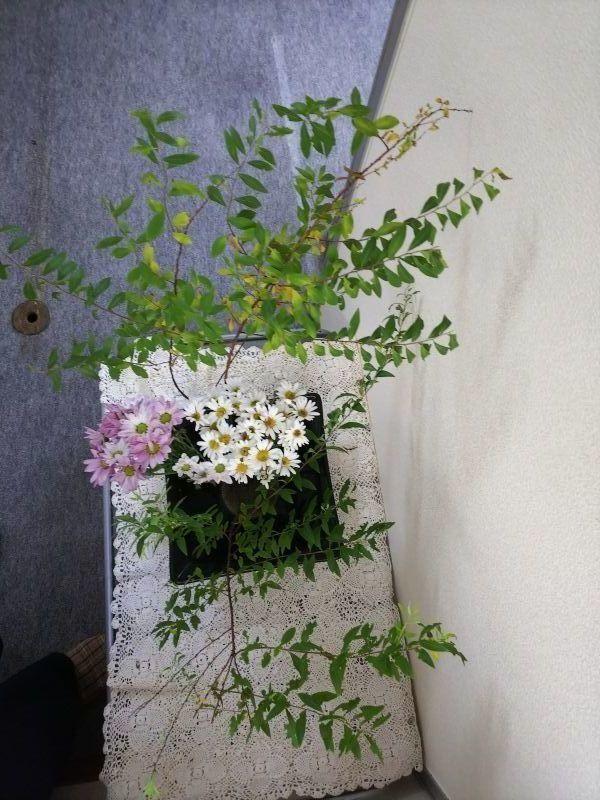 京都市右京区の相続税・贈与税対策室の今週の花(9月20日)