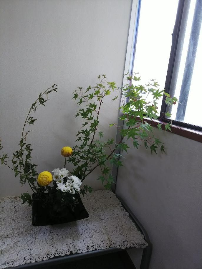 京都市右京区の相続税・贈与税対策の今週の花(9月26日)