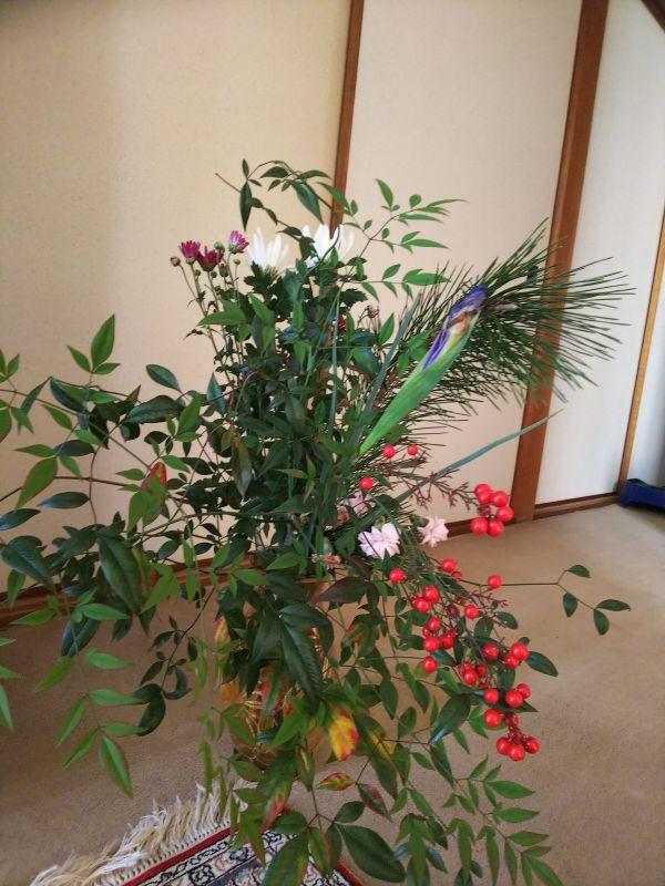 京都の相続税・贈与税対策室の花(1月18日)